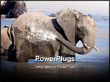 PowerPoint Template - Large African Elephant bathing in the waters of Mpondo in Kruger