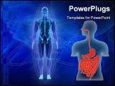 PowerPoint Template - Human torso as scheme of human alimentary system, illustration