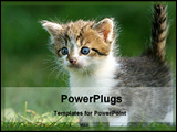 PowerPoint Template - cat in a field