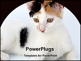PowerPoint Template - cat sitting on a floor