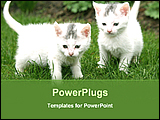 PowerPoint Template - two cute little kitten are playing