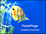 PowerPoint Template - colorful fish under the sea