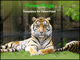 PowerPoint Template - tiger in the zoo