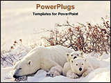 PowerPoint Template - polar bear with her cubs
