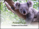 PowerPoint Template - koala sitting on a tree