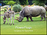 PowerPoint Template - rhinoceros and zebra in a zoo