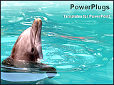 PowerPoint Template - a dolphin playing in water