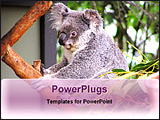 PowerPoint Template - a koala sitting on a branch of tree