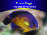 PowerPoint Template - angel fish