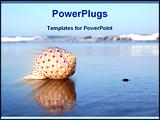 PowerPoint Template - seashell reflected on seashore