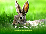PowerPoint Template - a cottontail bunny in tall green grass