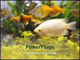 PowerPoint Template - A colorful view inside a busy aquarium