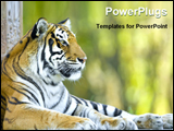 PowerPoint Template - Close up of a tiger resting at the zoo