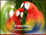 PowerPoint Template - a pair of scarlet macaws clean one another. taken in xcaret mexico.