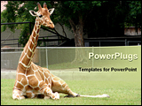 PowerPoint Template - This Giraffe was taking a break from all the zoo visitors. It was taken at a zoo in Louisiana.