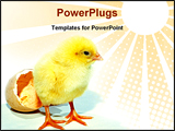 PowerPoint Template - a new born chicken came out from egg