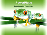 PowerPoint Template - tree frogs on leaf