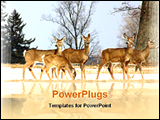 PowerPoint Template - deer reflection in water