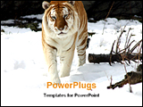 PowerPoint Template - one tiger walking on snow