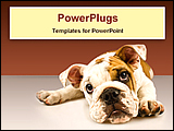 PowerPoint Template - close-up image of a puppy dog