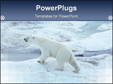 PowerPoint Template - Polrbear antartica hunt polar bear hunt ice animal white land animal watchingwild hunt