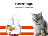 PowerPoint Template - concept - cat and gold fish over the white background