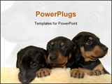 PowerPoint Template - Three sweet puppies