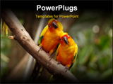 PowerPoint Template - A pair of yellow parrot in the parks.