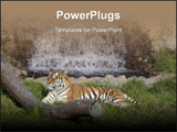 PowerPoint Template - Tiger in jungle