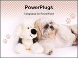 PowerPoint Template - Little Shih-Tzu dog next to a stuffed animal