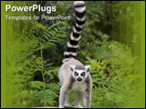 PowerPoint Template - an endangered ring-tailed lemur standing on a tree stump.
