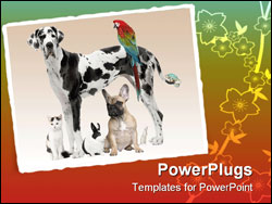 PowerPoint Template - Group of pets - Dogcat bird reptile rabbit - in front of a white background