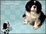 PowerPoint Template - Two king Charles cavellier dogs on a plain background.