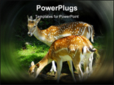 PowerPoint Template - Beautiful wild deer in forest during eating time in summer