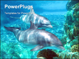 PowerPoint Template - Under water beauty (Dolphins)