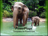 PowerPoint Template - jungle elephant display in a theme park