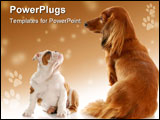 PowerPoint Template - ong haired miniature dachshund sitting beside english bulldog puppy with reflection on white backgr