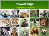 PowerPoint Template - nine wild animals at the zoo mix