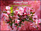 PowerPoint Template - Pink apple blossoms against a blue sky