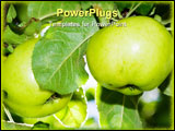 PowerPoint Template - Two apples in a tree green garden