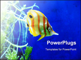PowerPoint Template - A yellow and white stripy tropical fish.