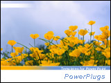 PowerPoint Template - Low angle of yellow flowers in the pastel blue sky