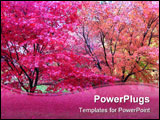 PowerPoint Template - Japanese maple trees with beautiful autumn colours.