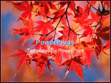 PowerPoint Template - red japanese maple