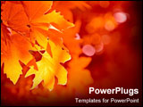 PowerPoint Template - The leaves have turned a beautiful array of fall colors.
