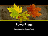 PowerPoint Template - A perfect autumnal maple leaf displaying a range of warm tones