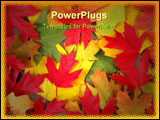PowerPoint Template - Colorful fall leaves of various trees on the ground