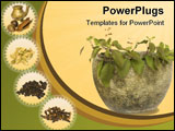PowerPoint Template - Holy Basil Tulasi in stone bowl with spices and oil isolated with clipping path
