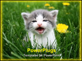PowerPoint Template - the first time this litle cat was outside in the grass