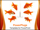 PowerPoint Template - goldfishes looking to the fishhook in the fishbowl